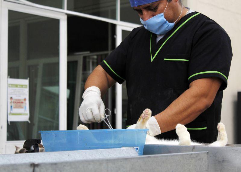 Llevamos a cabo la campaña de esterilización de perros y gatos, machos y hembras